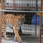 Animal circuses to be banned in Spain's capital city