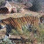 Arizona nature park provides haven for neglected animals
