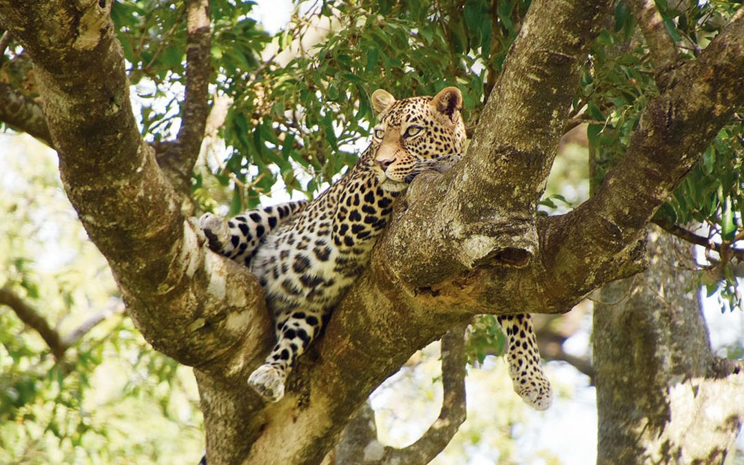 Call of the wild in Tanzania