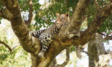 Call of the wild in Tanzania