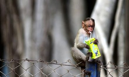 Garbage Dumps Leading to Shift in Food Habits of Wild Animals: Study