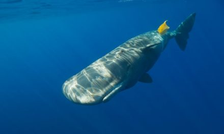 Plastics 'leading to reproductive problems for wildlife'