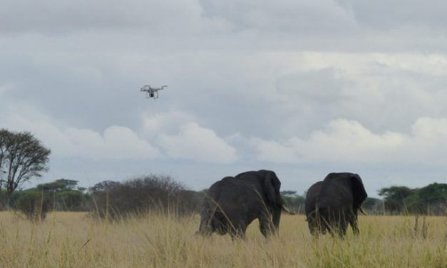 Drones and AI assist in mapping ecology, wildlife conservation