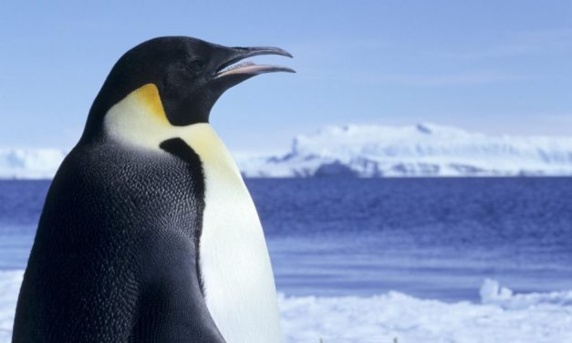 Wildlife in the Antarctic