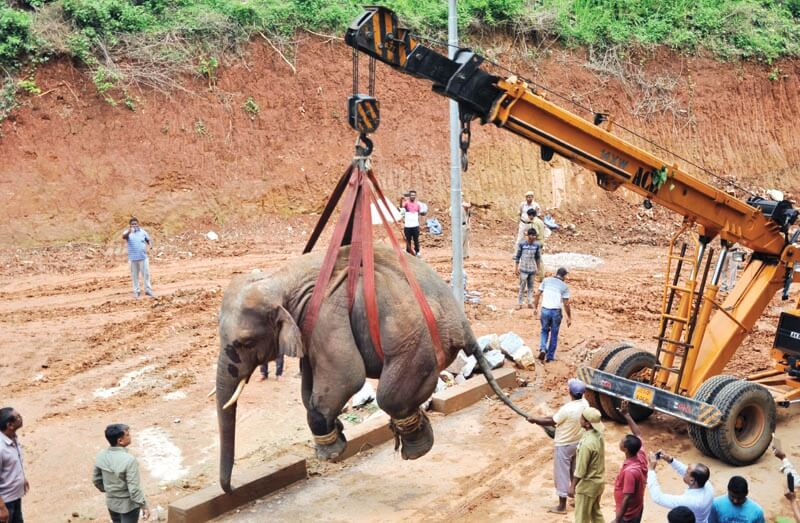 Wild Elephant Back To Amchang Wildlife Sanctuary