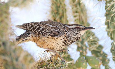 Preserving the Desert Birds