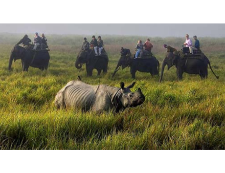 Assam ranked as 'Best Destination for Wildlife in India' at Lonely Planet Magazine's Travel Awards 2019