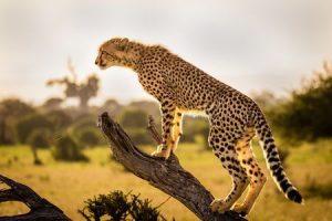 Adventure & Wildlife Photography Contest
