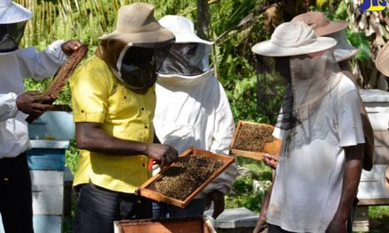APITOURISM – BEE TOURISM, SLOVENIA's LOVE FOR ITS BEES