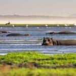Kayak Safari- A Safari through Crocodiles, Hippos, and Sharks.