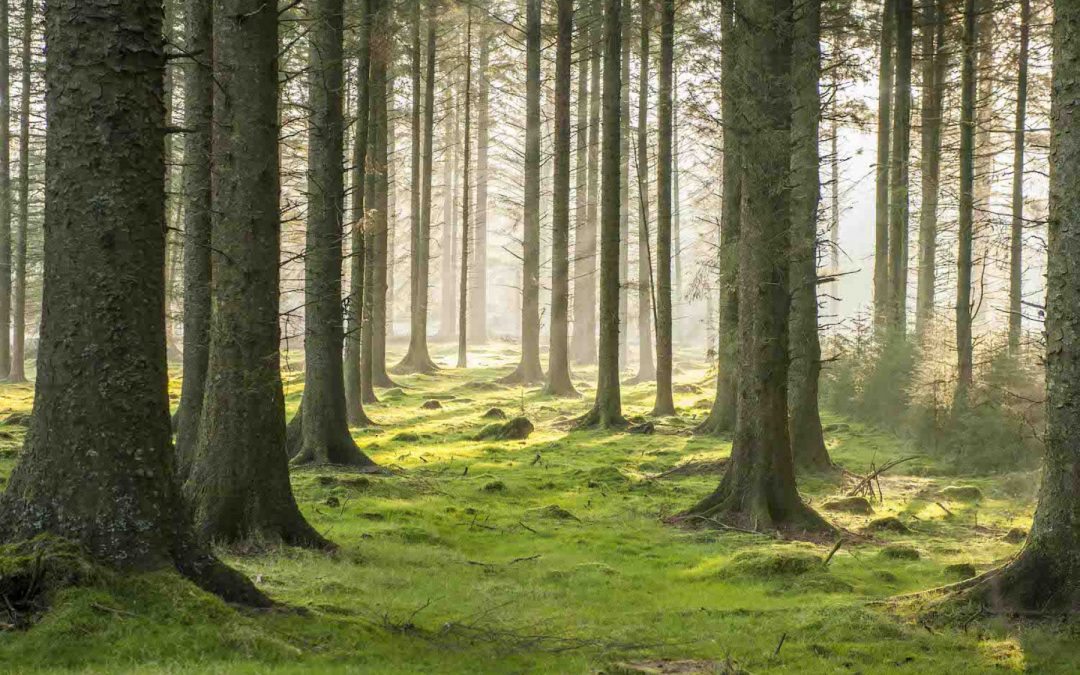 SHINRIN-YOKU – FOREST BATHING – IS GREAT FOR OUR HEALTH