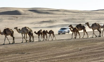 Gulf News Fun Drive 2020: Thrills and adventure welcomed participants