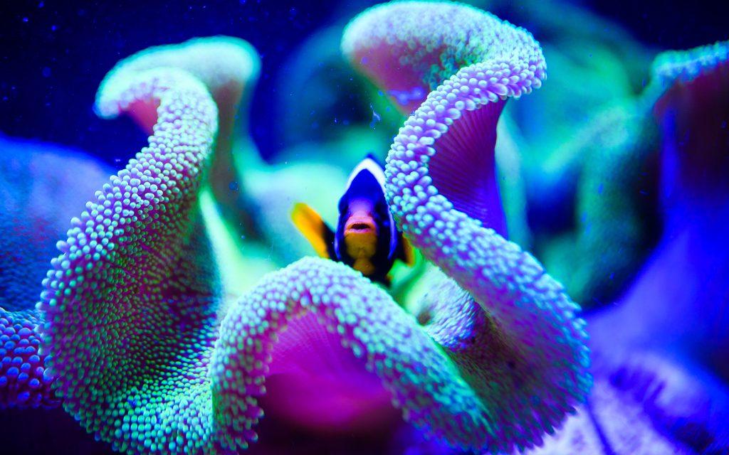 Virtual Experiences: A Deep-Sea Adventure