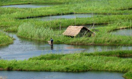 Mystical Floating Islands of Loktak Lake