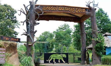 Wildlife Week: Forest Dept. To Undertake Survey Of Butterflies At Nagarahole