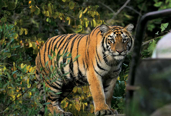 The Wild Nature Of Nature Tourism