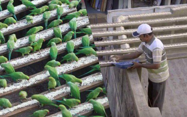 The Birdman of Chennai