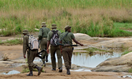 Wildlife Rangers Face A 'Toxic Mix' of Mental Strain and Lack of Support