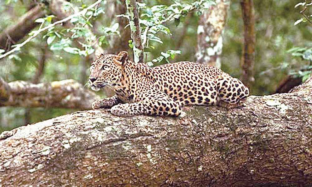Indian wildlife needs empathy, not just sympathy
