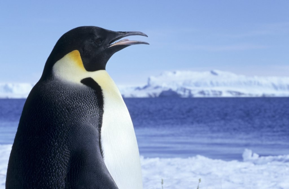 Wildlife in the Antarctic