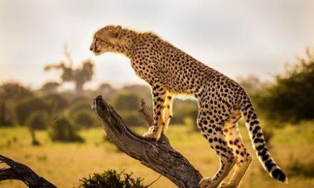 Adventure & Wildlife Photo Contest 2019: Wildlife of India