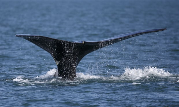 Counting Whales From Space: scientists and engineers plan hi-tech effort