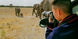 More than 70 photographers raise funds for wildlife