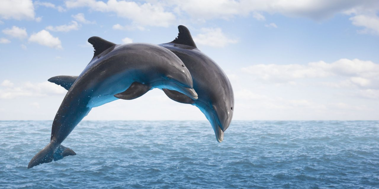 Dolphin conservation project planned off Mangaluru coast