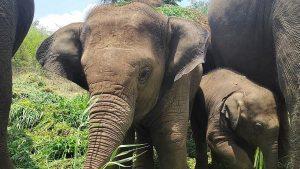 8 Postal Covers Released to Mark 66th 'Wildlife Week' in Karnataka